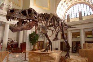 Dinasaur Bones